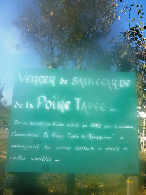 Comme d'habitude, on a dégusté la poire tapée. Rando VTT à Rivarennes(37)